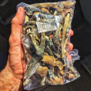 Magic mushrooms for sale