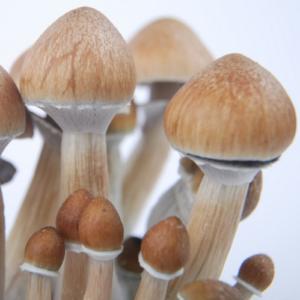Cambodian mushrooms